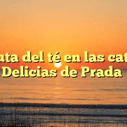 Disfruta del té en las catas de Delicias de Prada